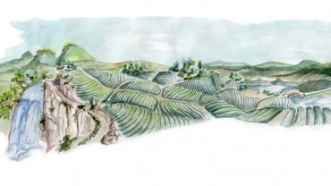 Splendoarea Plantațiilor de Ceai